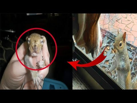 Squirrel Taps Window Every Day - 8 Years On, The Family Realises What Shes Desperate To Show Them