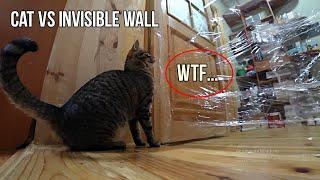 Cats vs Invisible Wall - КОТ VS НЕВИДИМАЯ СТЕНА