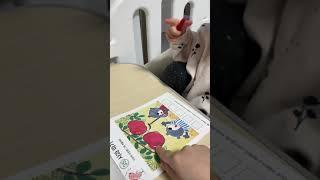 [교육] 33개월 아기_지능업 만2세 수와셈