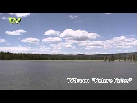 Yellowstone National Park - Fishing Bridge & Yellowstone lake