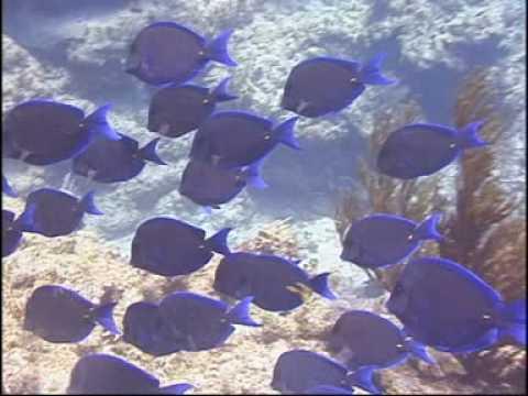 Cayman Brac -Cayman Islands in der Karibik