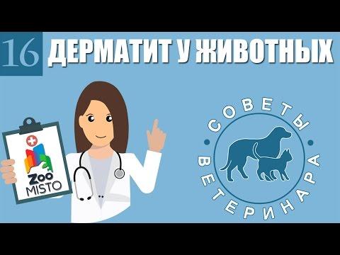 Аллергический дерматит: симптомы и лечение у взрослых