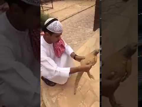 Saudi Guy Vs Sanda (lizard) | Funny Saudi crazy guy