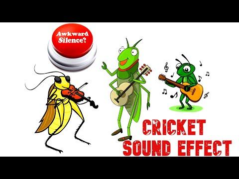 Awkward Silence Cricket Sound