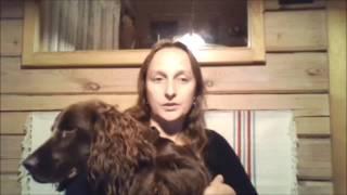 Путешествие в Финляндию и Норвегию на машине с собакой(Какие документы нужны, чтобы поехать за границу на машине с собакой? Личный опыт путешествия с собакой чере..., 2016-08-12T19:50:10.000Z)