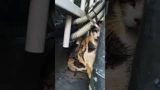 가로등고양이