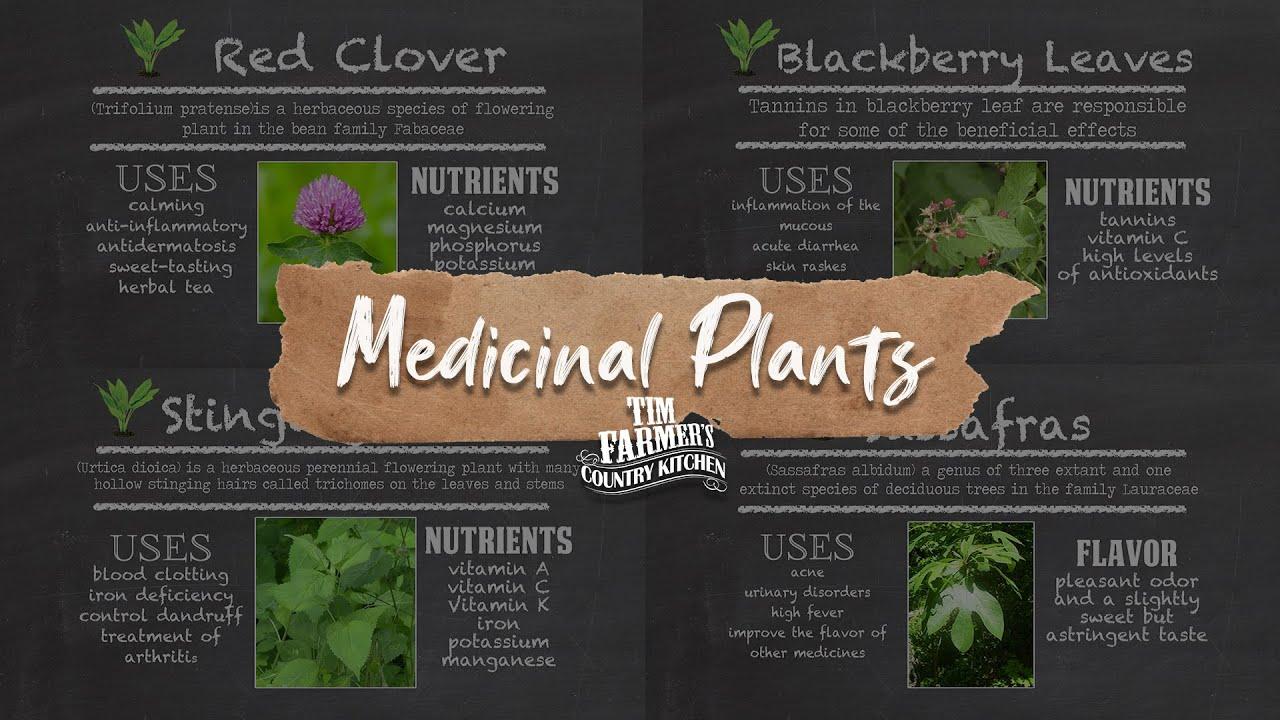 Native Medicinal Plants Part - 39: Native Medicinal Plants Part 1 (Red Clover, Stinging Nettle, Blackberry  Leaves U0026 Sassafras) - YouTube