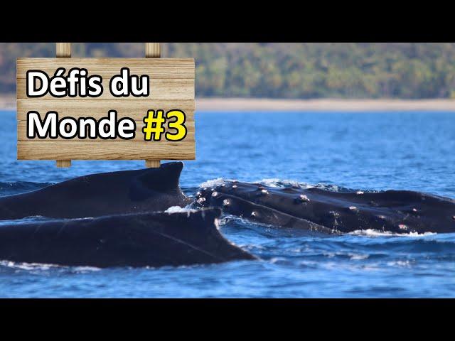 Voir des baleines au Costa Rica - Défi #3 - Nomades 2.0
