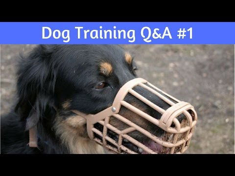 Dog Training Questions And Answers #1: No, These Are NOT CRUEL!