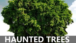 TOP 10 HAUNTED TREES IN INDIA