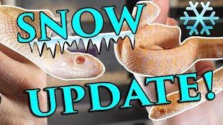 baby-snake-update
