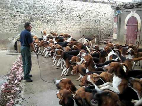 Thumbnail: Crazy feeding frenzy with the hounds at Chateau Cheverny
