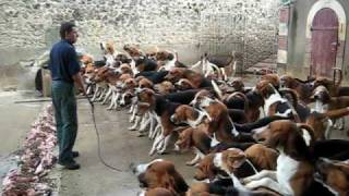 Crazy feeding frenzy with the hounds at Chateau Cheverny
