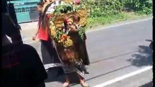 Barong Bangkung 2015 - Bali Traditional Culture
