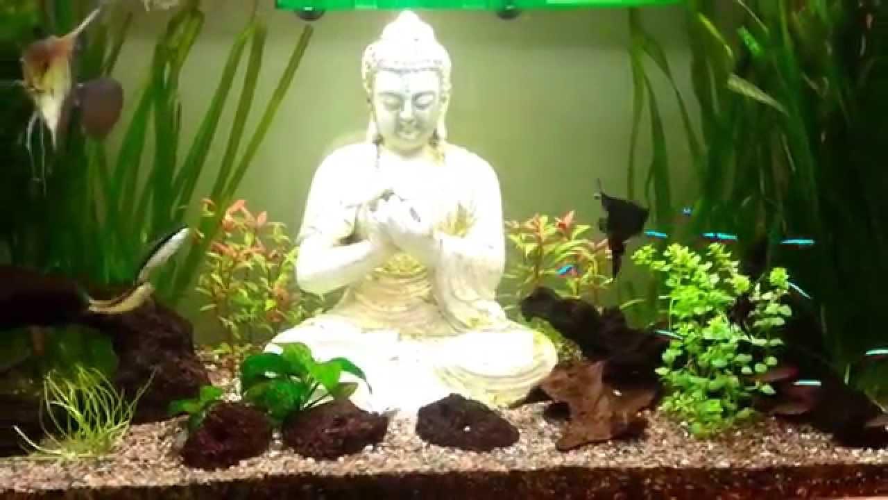 Acuario Peces Agua Caliente Con Plantas Naturales Youtube