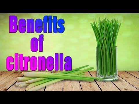 Health care   11 Citronella Oil Uses