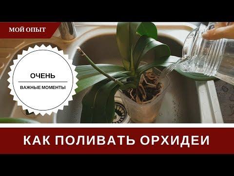 Полив Орхидеи 🌸 Как Поливать 🌸 Тонкости И Секреты 🌸  Чтобы Не Было Проблем И Загнивания