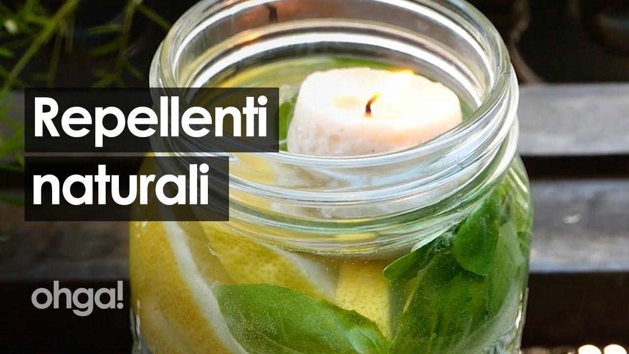 Repellente Naturale Per Vespe i repellenti naturali per tenere lontane zanzare, mosche e formiche!