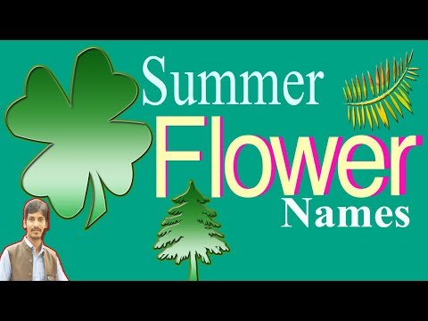 Top 25 Types Summer Flower Names in English | Summer Flowers | Faysal JeweL