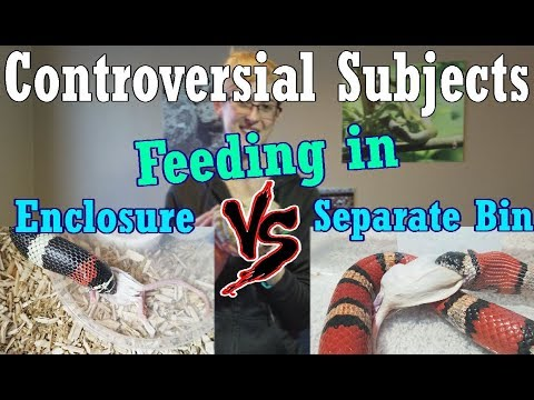 Con-Sub: Feeding in the Enclosure vs Separate Bins