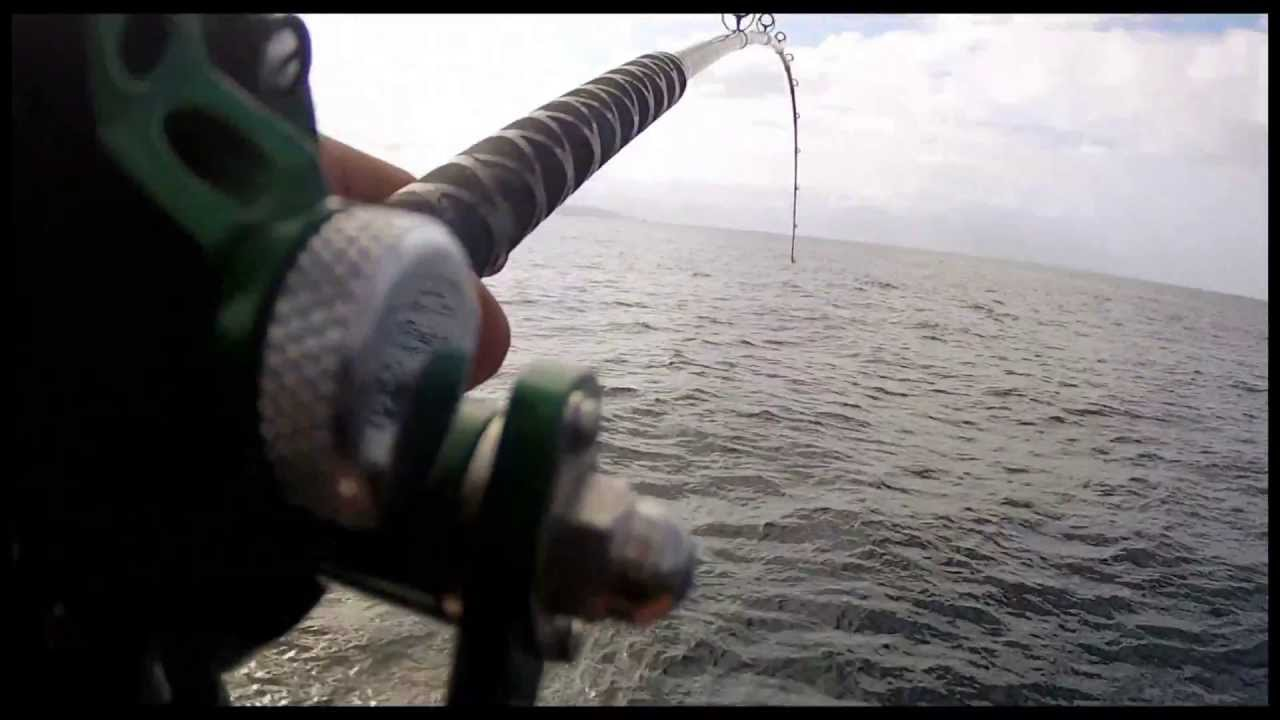 White seabass fishing on the new seaforth avet sx shimano for Seaforth landing fish count