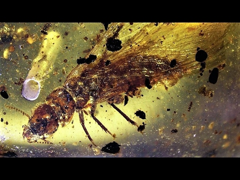 13 Amber Discoveries from Myanmar