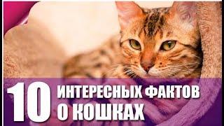 10 Фактов о кошках, которые вы даже и не знали!