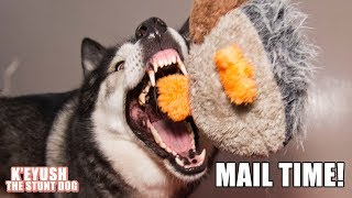 husky-destuffs-new-goose-in-under-a-minute-mail-time