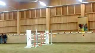 Haflinger springt!!!!!! WOW!!!!!!