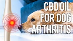 CBD Oil for Dog Arthritis (Quick Answers)
