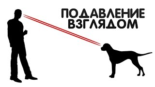 Подавление собаки взглядом