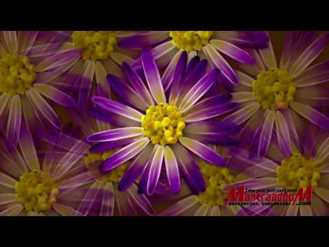 Free HD download Wedding background, Free motion graphics FLOWER V2 G1 thumbnail