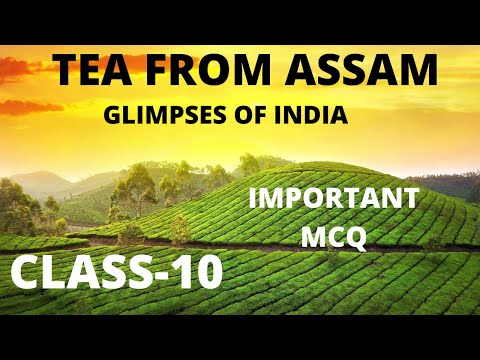 MCQ 'S of Tea from Assam// class 10//Glimpses of India//important  mcq's