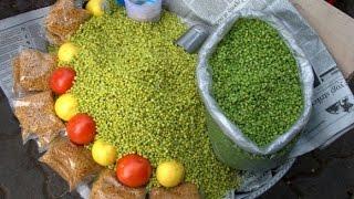 Ponk (Green Tender Sorghum) Season, Bardoli India