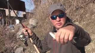 ловим толстолоба секреты рыбалки видео