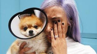 SHE NEARLY KILLED MY DOG!! 😭😱
