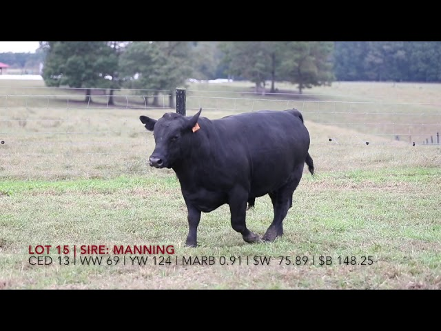 Edgewood Angus Lot 15