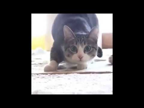 Cat and dog wiggle dance