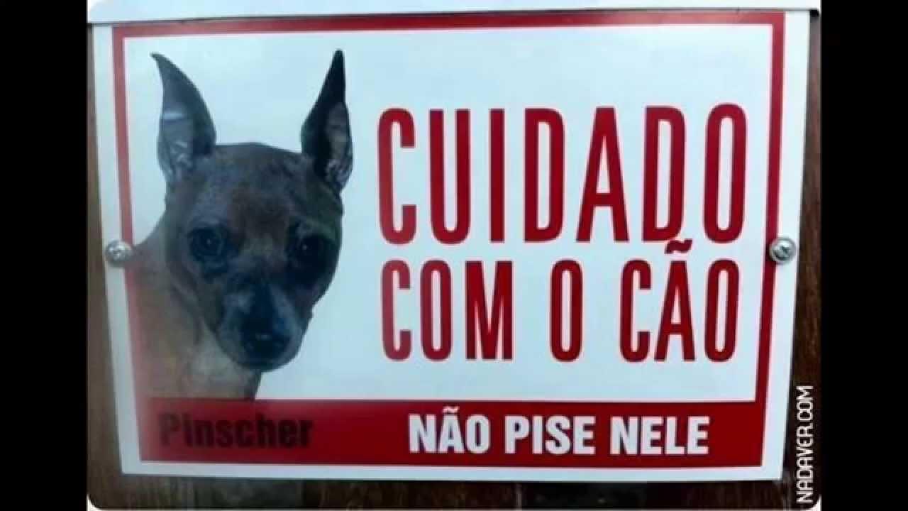Fotos Engraçadas para facebook cachorrinho