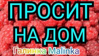 Деревенский дневник очень многодетной /Папа на всю жизнь /Просит на дом /Обзор /