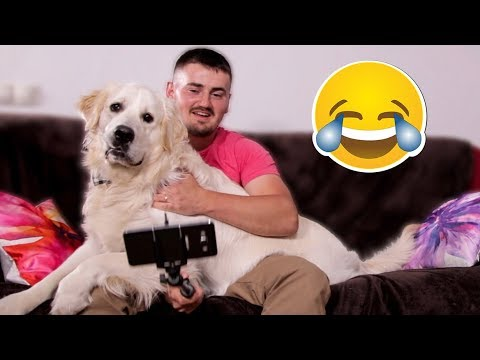 I Try to Take a Selfie with My Dog - Funny Golden Retriever