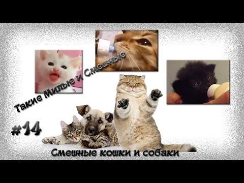 Смешные кошки и собаки, Такие Милые и Смешные#14