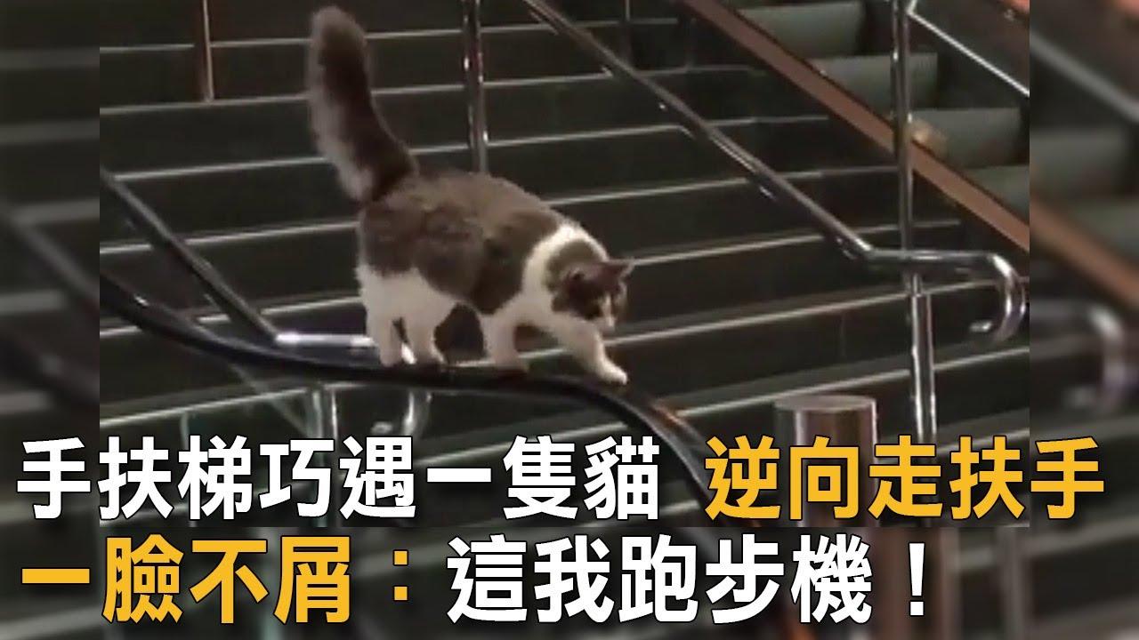 手扶梯巧遇一隻貓 逆向走扶手 一臉不屑:這我跑步機! 貓咪搞笑 手扶梯