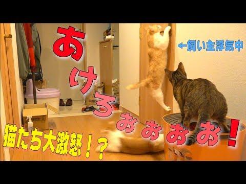 飼い主がトイレで他の猫に浮気してたら猫たちがドアをこじ開けようと突撃して来たwww