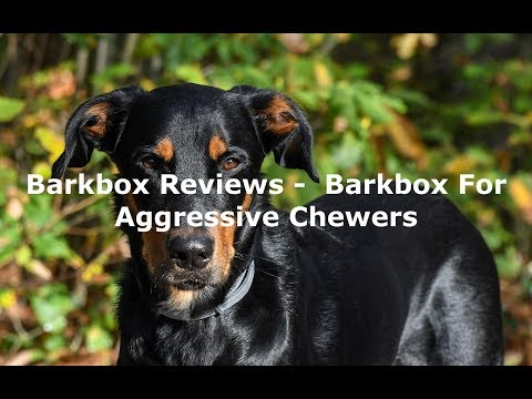 barkbox-reviews---barkbox-for-aggressive-chewers