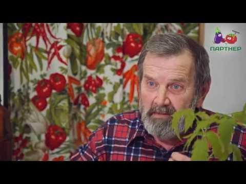 Видео Вырастить рассаду томатов в домашних условиях