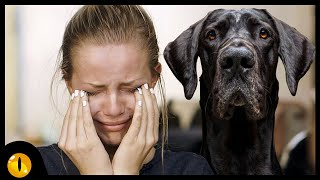 These 10 Shortest Living Dog Breeds will Leave You soon! (Sad truth)