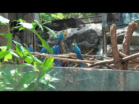 Chiang Mai, Thailand - Chiang Mai Zoo (Red States and Blue States)
