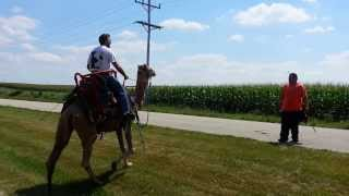 Call 815-600-6464 / Andreas Chicago Camel Guy!, Camel Rides, Camel Rental, American Camel Trainer,US