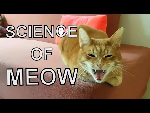 Alvi Cat : Cat Language - 7 Different Meanings Of 'meow'